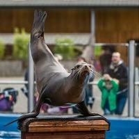 200x sea lion