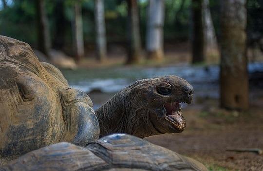 LttW tortoises 540x350