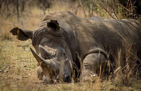Lttw rhino 540x350