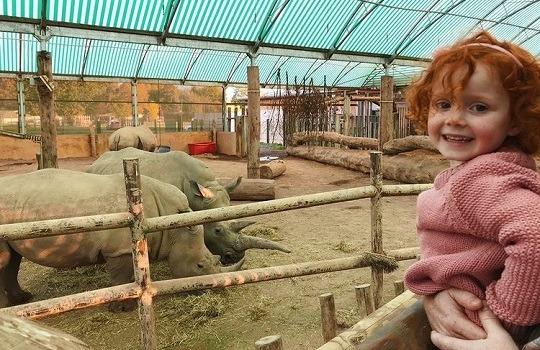 rhino 540