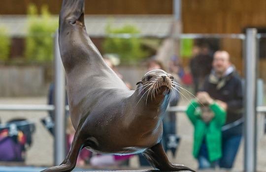 sea lion x540