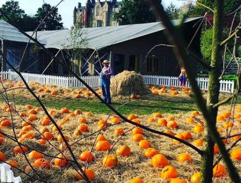 pumpkin-path